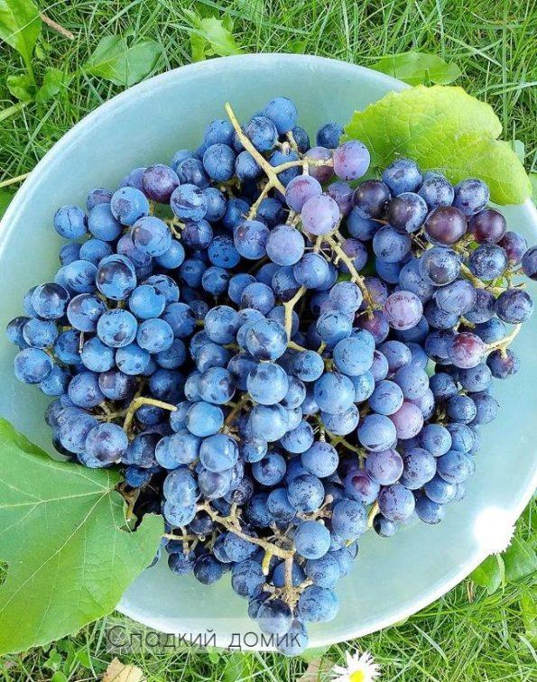Достаем косточки из винограда